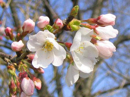 04'の桜@関宿城